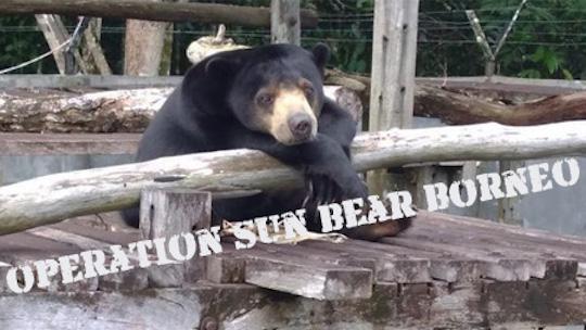 Hitam - Operation Sun Bear